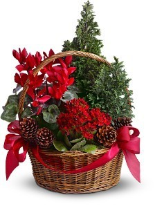 Conifer Basket