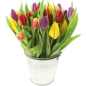 Spring Tulips in Zinc Pot